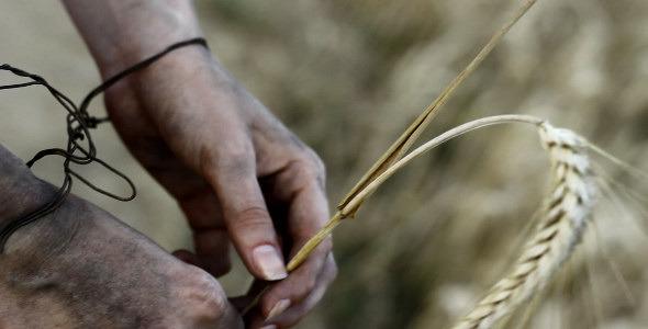 Holding Barley