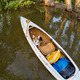 Corgi dog in canoe - PhotoDune Item for Sale