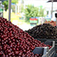 Bunch of Cherries at Market - VideoHive Item for Sale