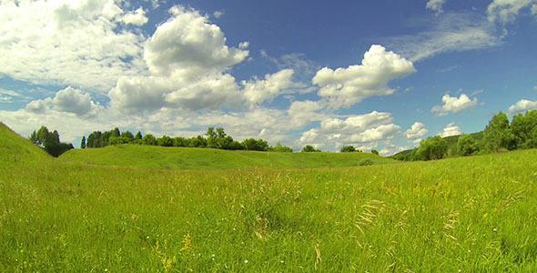 Green Meadow 6
