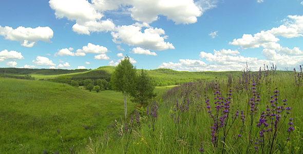 Green Meadow 5