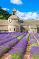 Abbey of Senanque and blooming rows lavender flowers - PhotoDune Item for Sale