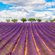 Panoramic view of Lavender field - PhotoDune Item for Sale