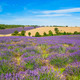 Lavender and wheat field - PhotoDune Item for Sale