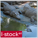 Crocodile In Zoo 2 - VideoHive Item for Sale