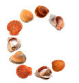 Letter C composed of seashells - PhotoDune Item for Sale