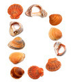 Letter D composed of seashells - PhotoDune Item for Sale