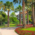 landscape with palm trees and flower beds - PhotoDune Item for Sale