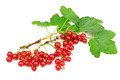 red currant isolated on white background - PhotoDune Item for Sale