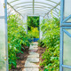 arched greenhouse - PhotoDune Item for Sale