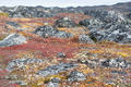 Lichen and tundra vegetation - PhotoDune Item for Sale