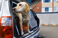 Sniffer Dog - PhotoDune Item for Sale
