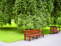 Green park - PhotoDune Item for Sale