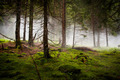 Dramatic Forest with Fog - PhotoDune Item for Sale