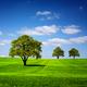 Green nature landscape - PhotoDune Item for Sale