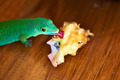 Green gecko lizard eating apple core - PhotoDune Item for Sale