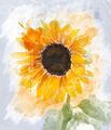 Watercolor Image Of  Sunflower - PhotoDune Item for Sale