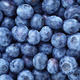 fresh ripe  blueberries berries - PhotoDune Item for Sale