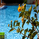 Flowers by the Pool - VideoHive Item for Sale