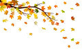 Autumn branch - PhotoDune Item for Sale