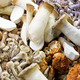 Wild mushrooms - PhotoDune Item for Sale