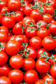 Tomato with vine - PhotoDune Item for Sale