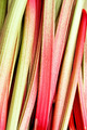 Rhubarb - PhotoDune Item for Sale