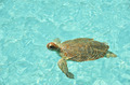 Green sea turtle. Exuma, Bahamas - PhotoDune Item for Sale