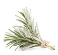 rosemary herb spice leaves isolated on white background cutout - PhotoDune Item for Sale