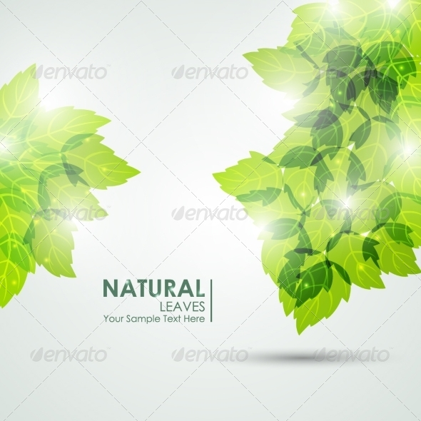GraphicRiver Natural Leaves Vector 8326886