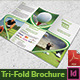 Golf Tournament Trifold Brochure - GraphicRiver Item for Sale