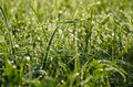 Green Grass with Raindrops with Bokeh - PhotoDune Item for Sale
