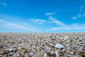 Shells on the beach and blue sky. - PhotoDune Item for Sale