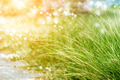 Flower grass in the garden. - PhotoDune Item for Sale