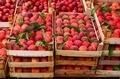 Peaches in crates - PhotoDune Item for Sale