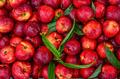 Peaches background - PhotoDune Item for Sale