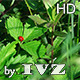 Ladybug in the Grass - VideoHive Item for Sale