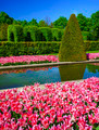 Tulip gardens in the Keukenhof.  - PhotoDune Item for Sale