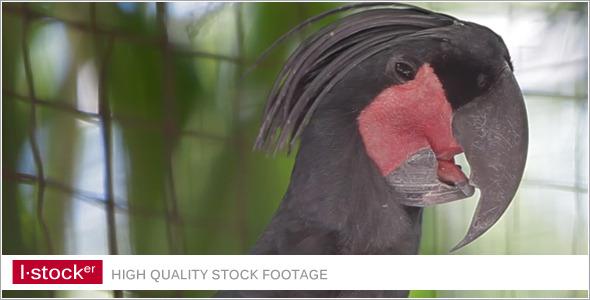 Parrot In Zoo 5