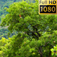 Fairytale Tree In The Wind - VideoHive Item for Sale