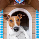 bavarian dog house - PhotoDune Item for Sale