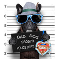 mugshot dog - PhotoDune Item for Sale