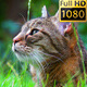 Cat In The Grass 01 - VideoHive Item for Sale