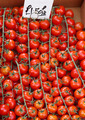 Tomatoes on vine - PhotoDune Item for Sale