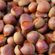 Hazelnuts in shells - PhotoDune Item for Sale
