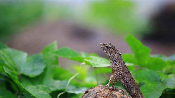 Lizard In Rainy Morning