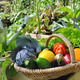 vegetables basket in garden  - PhotoDune Item for Sale