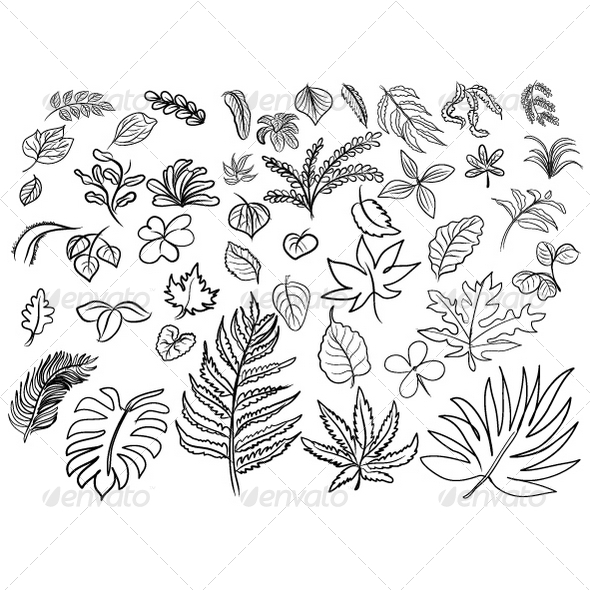 GraphicRiver Vector Drawing of Leaves 8350575