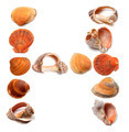 Letter H composed of seashells - PhotoDune Item for Sale