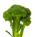 Broccoli on white background. - PhotoDune Item for Sale